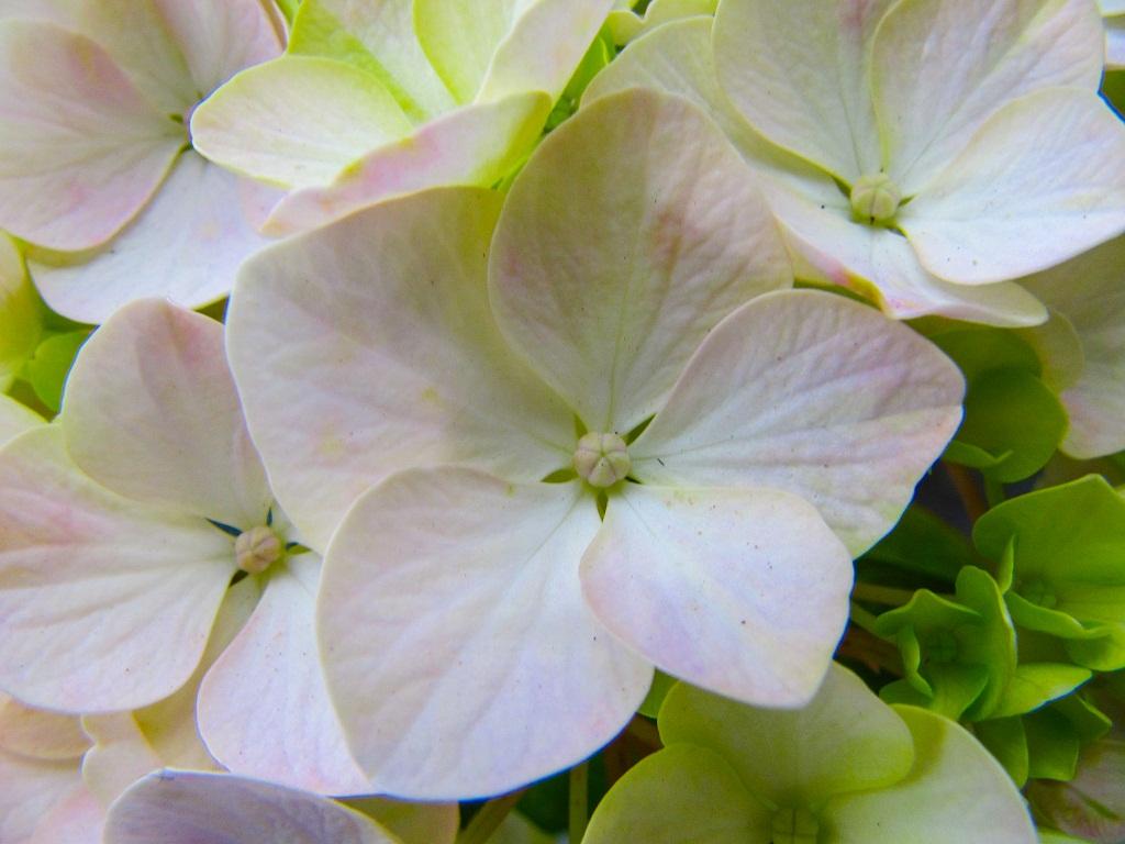 fiore macro 10
