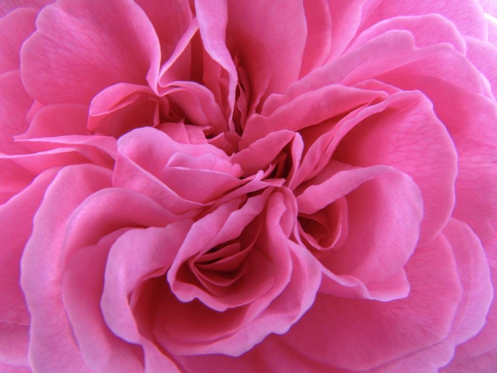 fiore macro 6