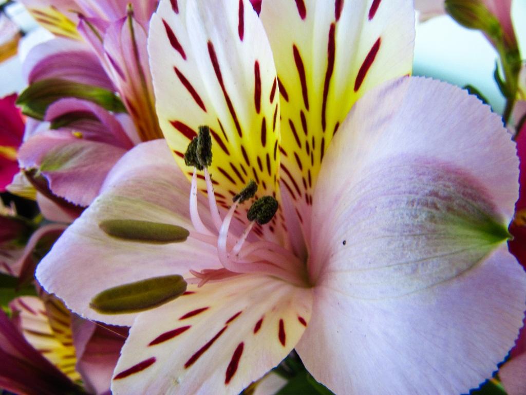 fiore macro 8