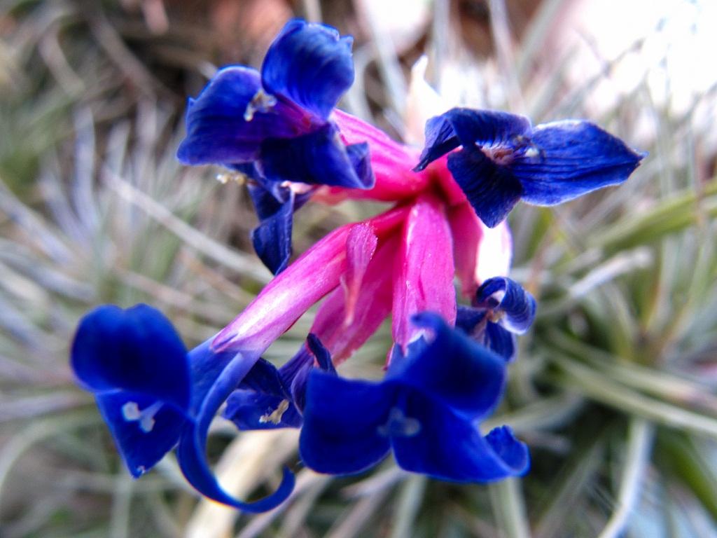 fiore macro 9